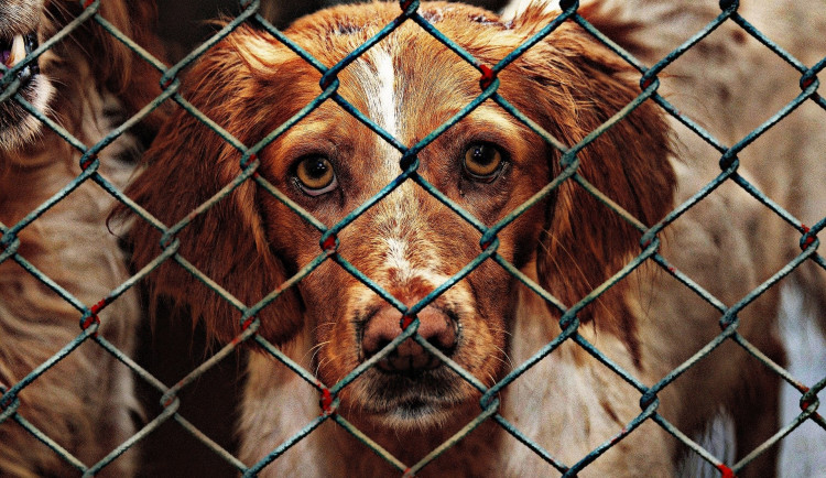Olomoučtí strážníci vyjížděli k několika oznámením o toulavých psech