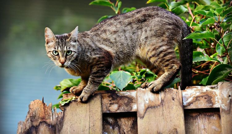 VÍKEND PODLE DRBNY: Mikulášská tramvaj, Mezinárodní výstava koček nebo Mint Market