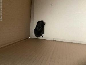 Městská policie vyjížděla k netradičnímu nálezu: V olomouckém hotelu našli netopýra