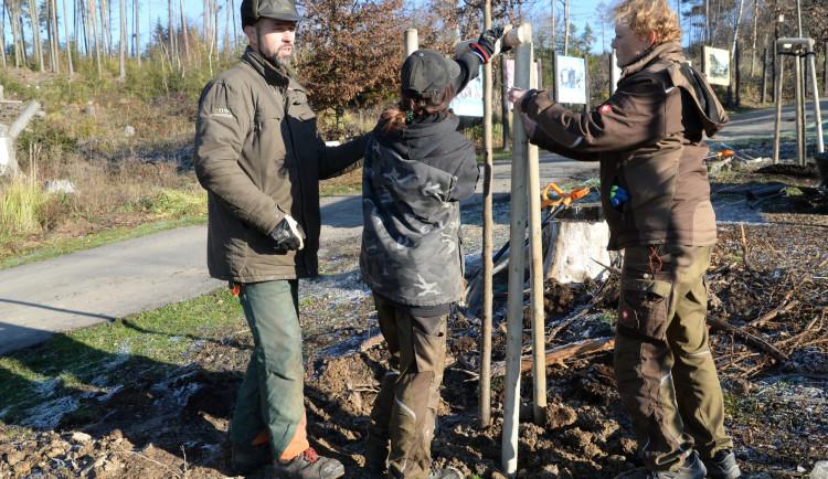 FOTO: Pracovníci olomoucké ZOO rozhodli o výsadbě nových stromů a plán hned uskutečnili