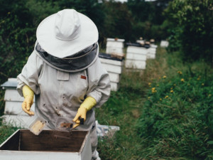 Kraj podpoří včelaře dotací ve výši milionu korun