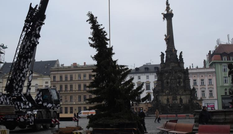 FOTO: Vánočnímu stromku v Olomouci už odzvonilo
