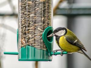 Do konce víkendu probíhá sčítání ptactva na krmítkách. Můžete se zapojit i vy