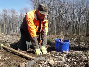 Lesníky z Arcibiskupských lesů čeká perný rok. Musí nasadit šest a půl milionu sazenic