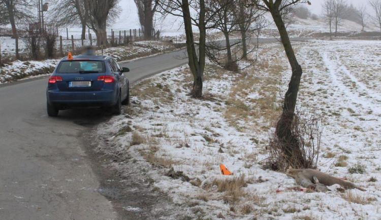 Řidiči se nepodařilo zabránit střetu se srnou. Zvíře nehodu nepřežilo