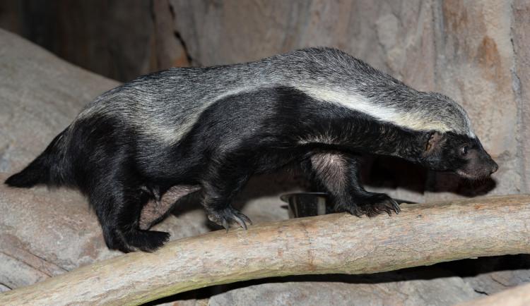 Olomoucká zoo počítá loňské úspěchy i škody z vichřice