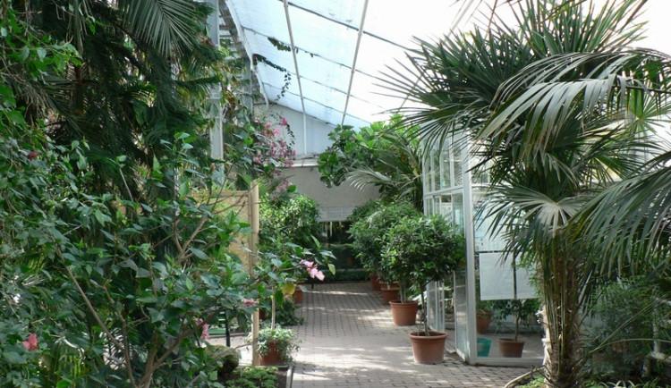 Exotika v centru města, Flora Olomouc od února opět otevře brány sbírkových skleníků