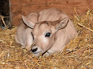FOTO: V olomoucké ZOO se narodila první mláďátka tohoto roku