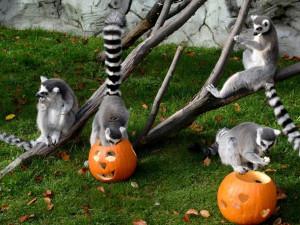 V minulém roce mírně klesla návštěvnost olomoucké zoo, může za to březnová vichřice