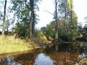Prostějovské parky jsou kvůli silnému větru zavřené, Olomouc je zatím zavřít neplánuje