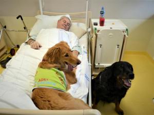 Psí terapeutové pomáhají pacientům LDN v Prostějově