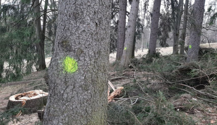 V jesenických sadech musí k zemi dalších 15 stromů. Silný vichr jich skolil už 50
