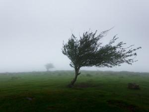 Meteorologové opět varují před silným větrem. Udeří dnes a v neděli