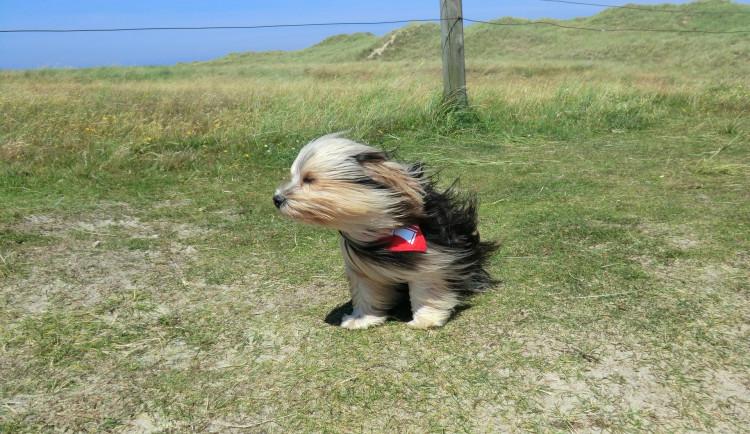 V neděli přijde silný vítr a srážky. Dlouhodobá předpověď hlásí teplé počasí