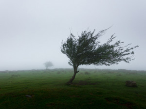 AKTUÁLNĚ: V platnosti je nová výstraha před silným větrem