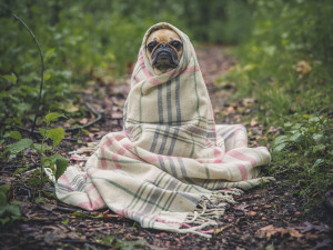 Státní veterinární správa spustila novou databázi ztracených psů