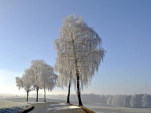 V Jeseníkách připadl nový sníh. Zlepšily se lyžařské podmínky