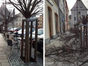 Stromy na Dolním náměstí razantně změnily svou podobu
