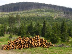 Aktivisté upozorňují na rozsáhlé holiny po kůrovcové těžbě v Jeseníkách. Podle těžařů žádné takové holiny nevznikají