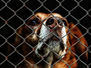 Zájem o zvířata z útulku vzrostl, může za to hlavně pandemie