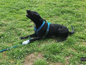 Strážníci městské policie zasahovali na psím cvičišti. Ošetřovali zraněnou tlapku