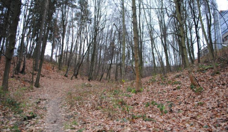 Šumperský lesopark Cihelna změní podobu. Proměna vyjde na 7 milionů