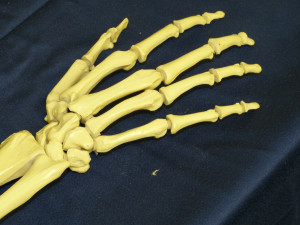 Děti našly ve Smetanových sadech vykopané kosti. Jedná se o lidské ostatky