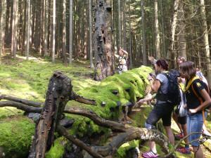 Olomoucký kraj hledá ekologické školy. Udělí jim titul Zelená škola