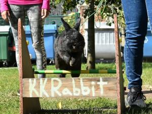 Na přerovské výstaviště zamíří o víkendu chovatelé králíků, drůběže, holubů i okrasného ptactva