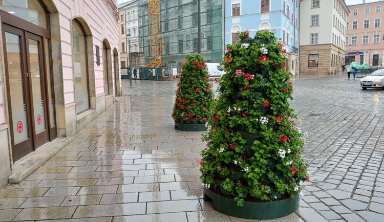 Olomoucká náměstí opět rozkvétají. Nově pokvete také třída 1. máje