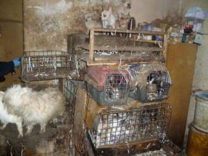 Policisté obvinili chovatelku psů z týrání zvířat. V jejím domě bylo čtyřicet zbídačených psů, obchodovala s nimi