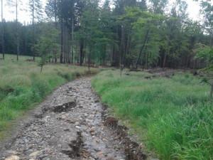 Déšť poškodil lesní cesty na Jesenicku. Opravy budou stát stovky tisíc korun