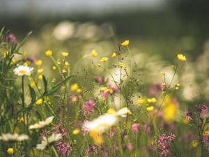 Olomouc reaguje na hrozící sucho změnou režimu v sečení trávy i zakládáním luk