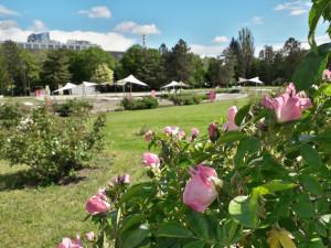 Příští víkend bude olomoucké Rozárium patřit oslavě růží