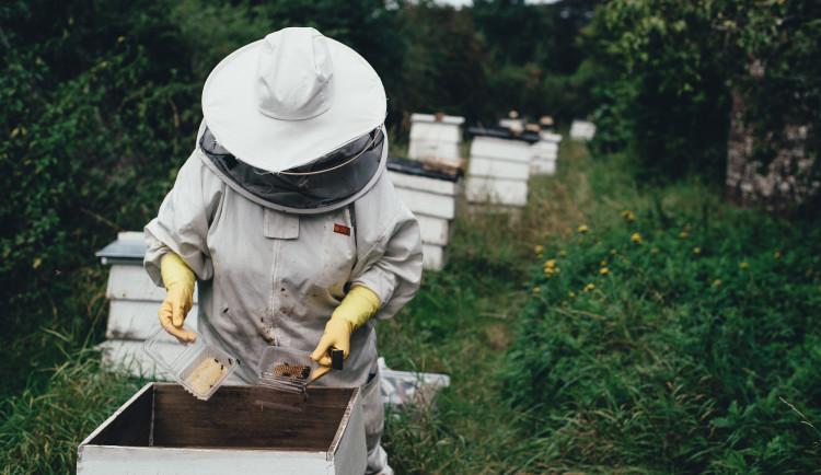 Suché počasí, nevhodná výsadba a sečení trávníků včelám neprospívá. Ubývá jim obživa