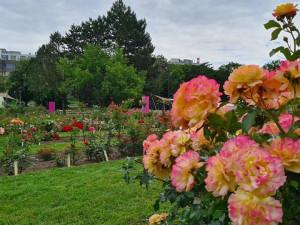 Přijďte odhalit tajemství nejvznešenější květiny na světě. Olomoucké Rozárium uspořádá oslavu růží