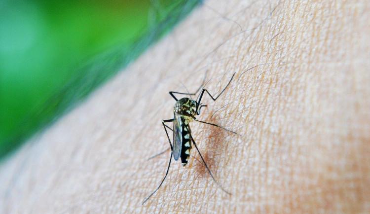 Obce na Litovelsku bojují s přemnoženými komáry. Pomoci by měl speciální postřik