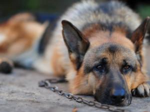 Olomouc vybrala nový útulek pro zatoulané psy