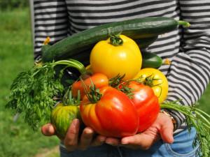 Letní festival Země na talíři se vOlomouci zaměří na městské zahradničení