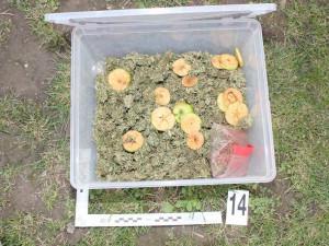 Desítky rostlin konopí, kila sušené marihuany, hašiš i pervitin našli policisté při domovní prohlídce dealera