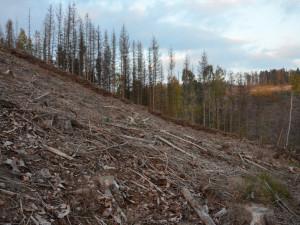 Kůrovcem je silně zasaženo 47 procent katastrů v Česku. Ministerstvo rozšířilo zónu s mimořádným opatřením