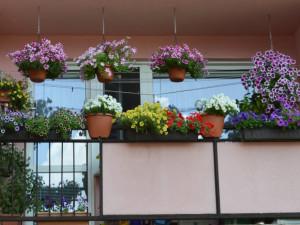 Květinová soutěž potrvá do konce srpna. Výzdoba se hodnotí v různých kategoriích