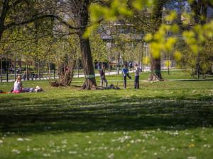 Olomouc otevírá diskuzi o zeleni ve městě. V září proběhne veřejná debata