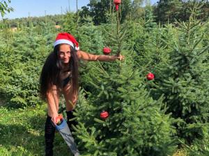 U Prostějova se začínají prodávat vánoční stromky. V prosinci ho zákazníkovi dovezou až domů