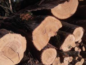 Arcibiskupské lesy a statky začnou nabízet své produkty občanům. Ke koupi bude dřevo i zvěřina