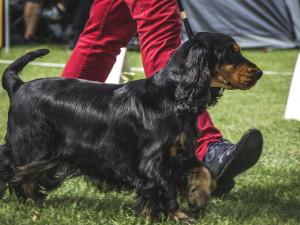 Na Floře se o víkendu předvede přes dva a půl tisíce psích šampionů na výstavě Floracanis Olomouc