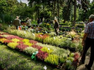 Flora Olomouc bude na podzimní přehlídce kontrolovat počet návštěvníků