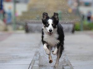 O zatoulané a opuštěné psy se v Olomouci postará nový útulek