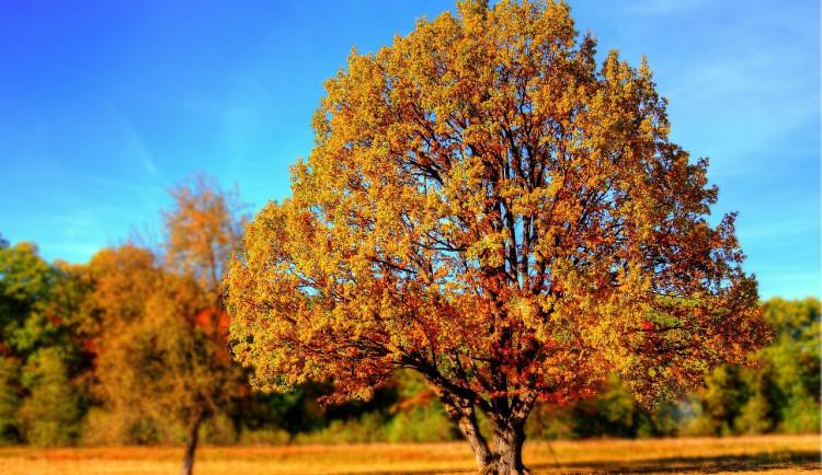 Podzim přinese další ochlazení, srážky budou v příštím týdnu slabé