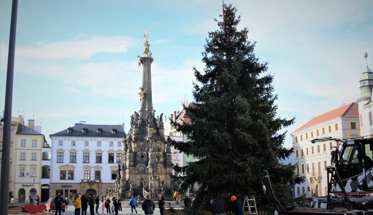 FOTO/VIDEO: Na olomouckém Horním náměstí již stojí vánoční stromeček. Jak se vám líbí?